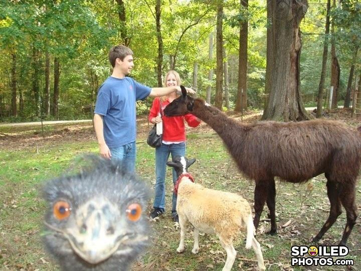 - llama gonna goat me some pussy