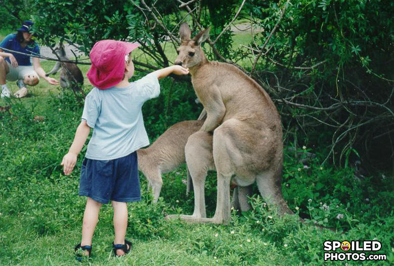 - it looks like the other deer is giving the kid hea